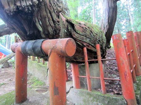八ツ房杉の支柱