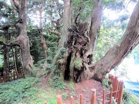 八ツ房杉のワイヤー