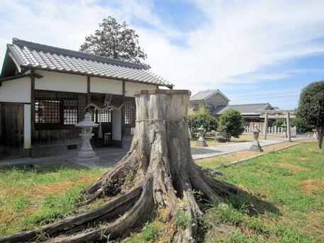 金橋神社の御神木