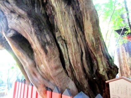 水谷神社のイブキ