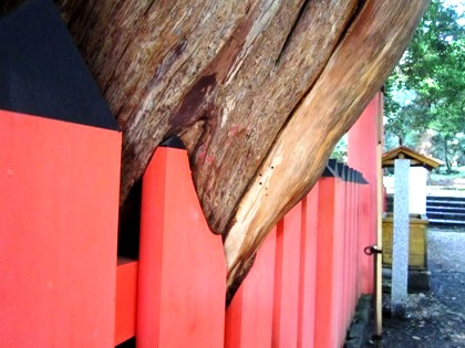 水谷神社の宿生木