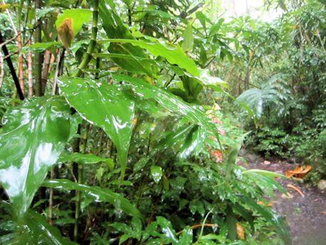 マノア滝の植物