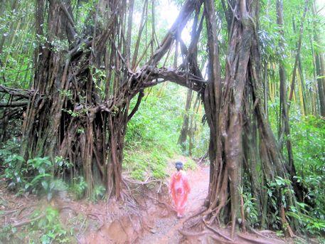 バニヤンツリーのトンネル