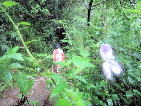 マノア・フォールズ・トレイルの花