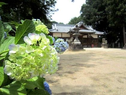 糸井神社の紫陽花