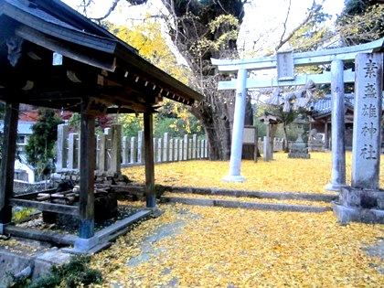 素盞雄神社の大銀杏