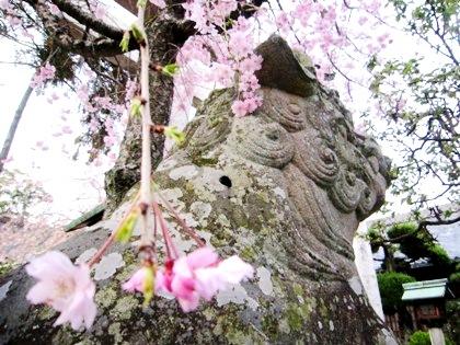 三輪坐恵比須神社狛犬と桜