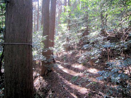 花山塚古墳の道程