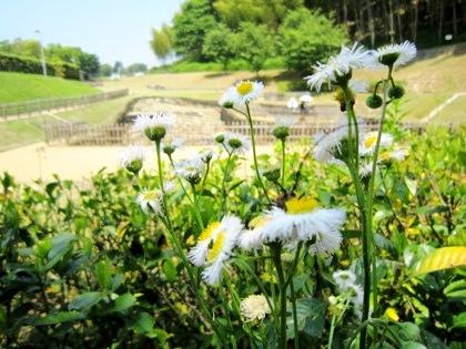 亀形石造物周辺の花