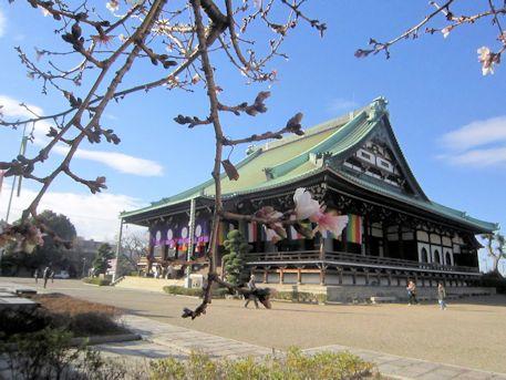 大念仏寺の桜