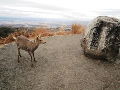 鶯塚古墳の鹿