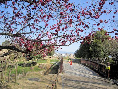 馬見丘陵公園の紅梅