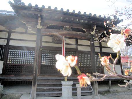 大福寺本堂と桜