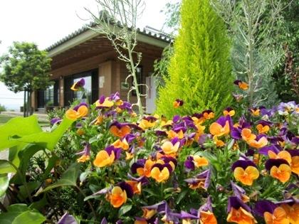 天理市トレイルセンターの花