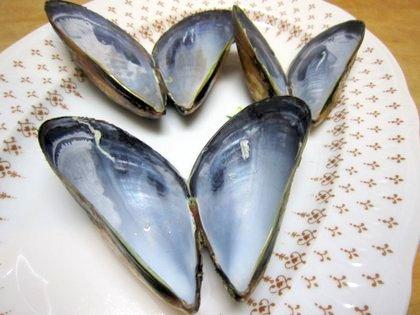 ムール貝の貝殻