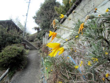 八王子神社参道の花