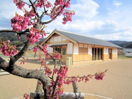 飛鳥京跡苑池休憩舎と寒緋桜