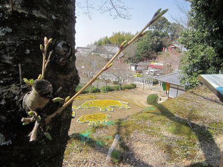 桜とイノシシの干支花絵