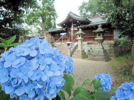 鷺栖神社の紫陽花
