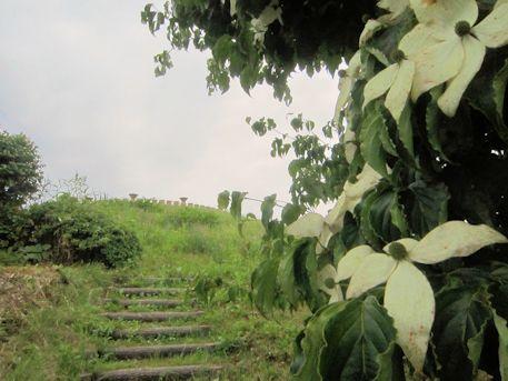 三陵墓西古墳と花