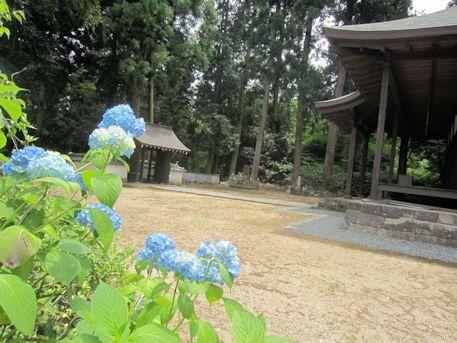 来迎寺の紫陽花
