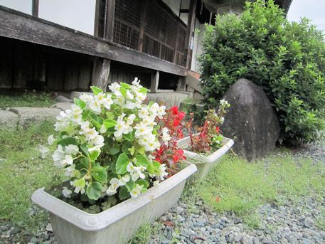 置恩寺境内の花