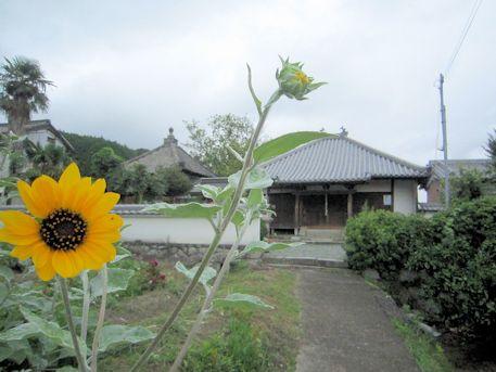 置恩寺と向日葵