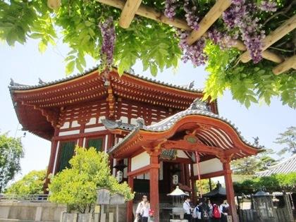 興福寺南円堂の藤棚
