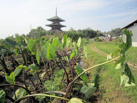 法起寺三重塔と蓮