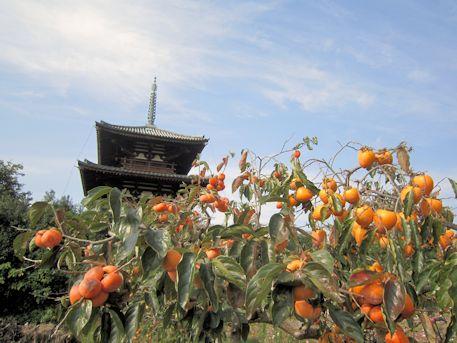 法起寺三重塔と柿