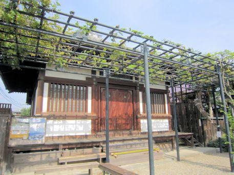 中宮寺の藤棚
