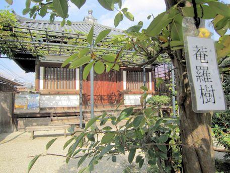 中宮寺の菴羅樹